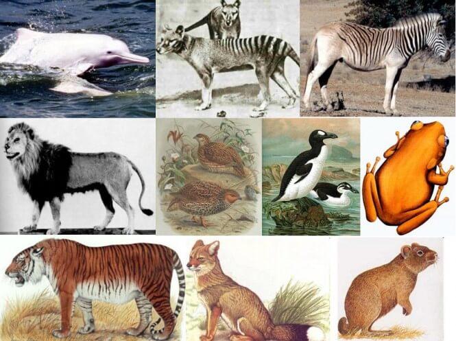 lista de animales extintos