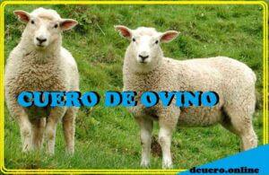cuero de ovino
